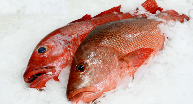 Negombo red snapper